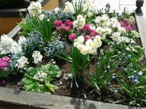 Maggio, il mese dei fiori